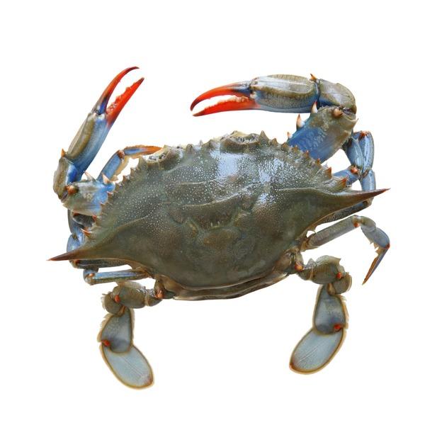 Fresh Wild Caught Blue Crab (lb) from Smart & Final - Instacart