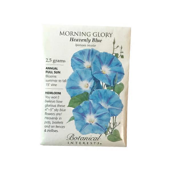 Botanical Interests Morning Glory Heavenly Blue