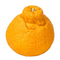 Sumo Mandarin