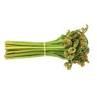 Fiddlehead Ferns