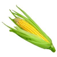 Yellow Sweet Corn Crate