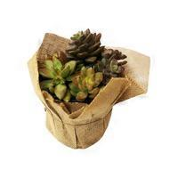 Charlie's Produce Assorted Combo Eco Chic Succulent With Pot Cover