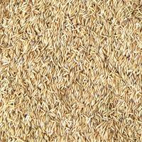 Organic Brown Long Rice