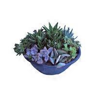 """12"""" Succulent Bowl"""